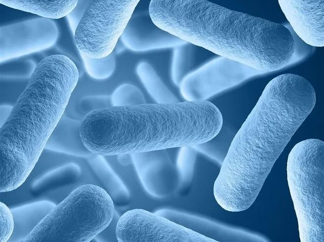 微生物菌种都有哪些,分别有什么好处?