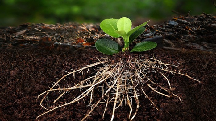 生根剂有哪些?比较好的生根剂是哪种?